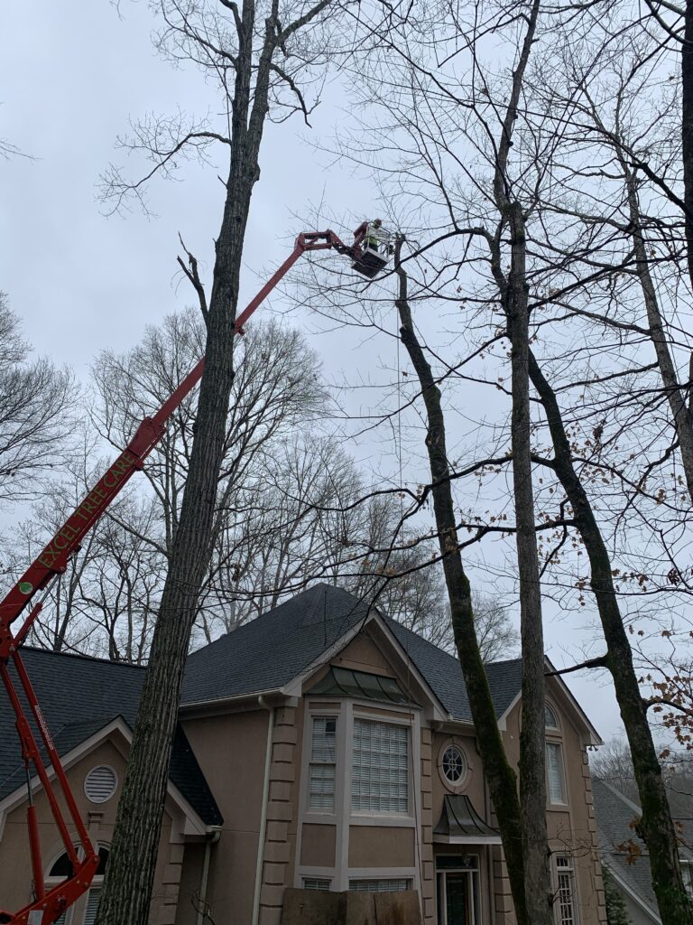 Tree Crown Maintenance at Excel Tree Care