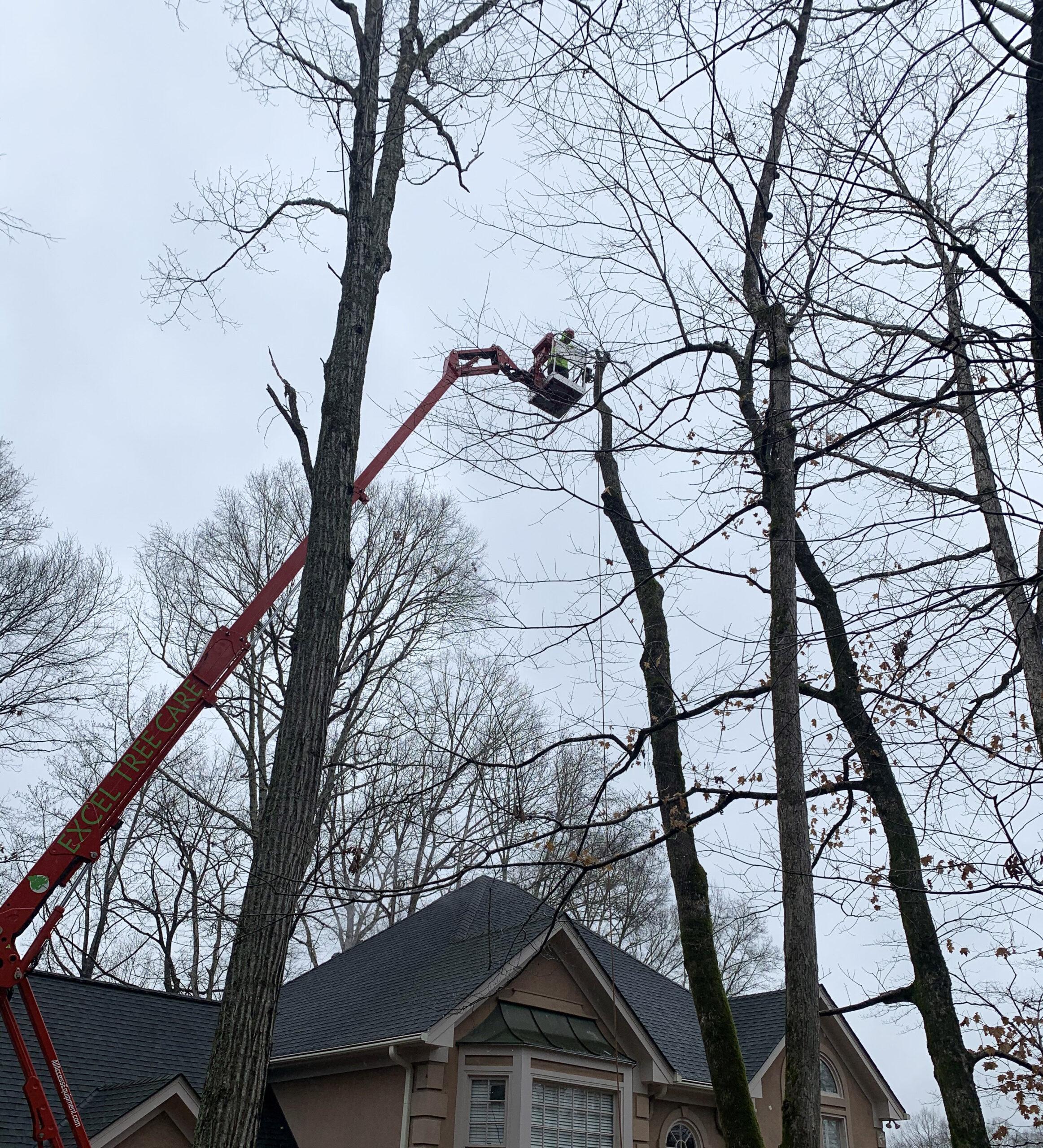 Tree Crown Maintenance