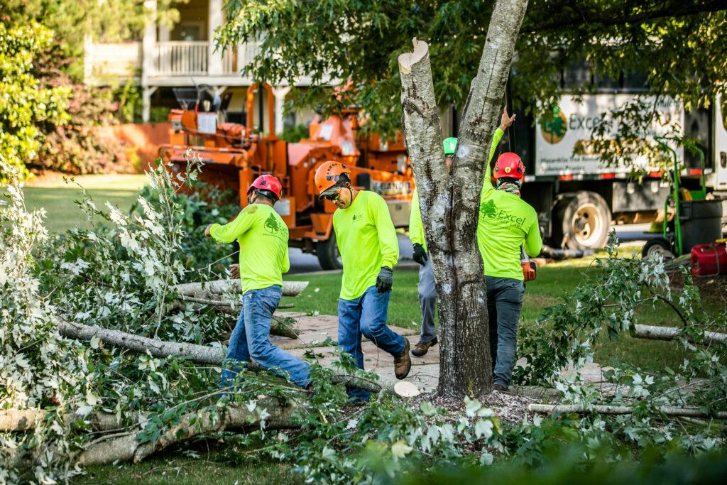 Limb & Tree Removal