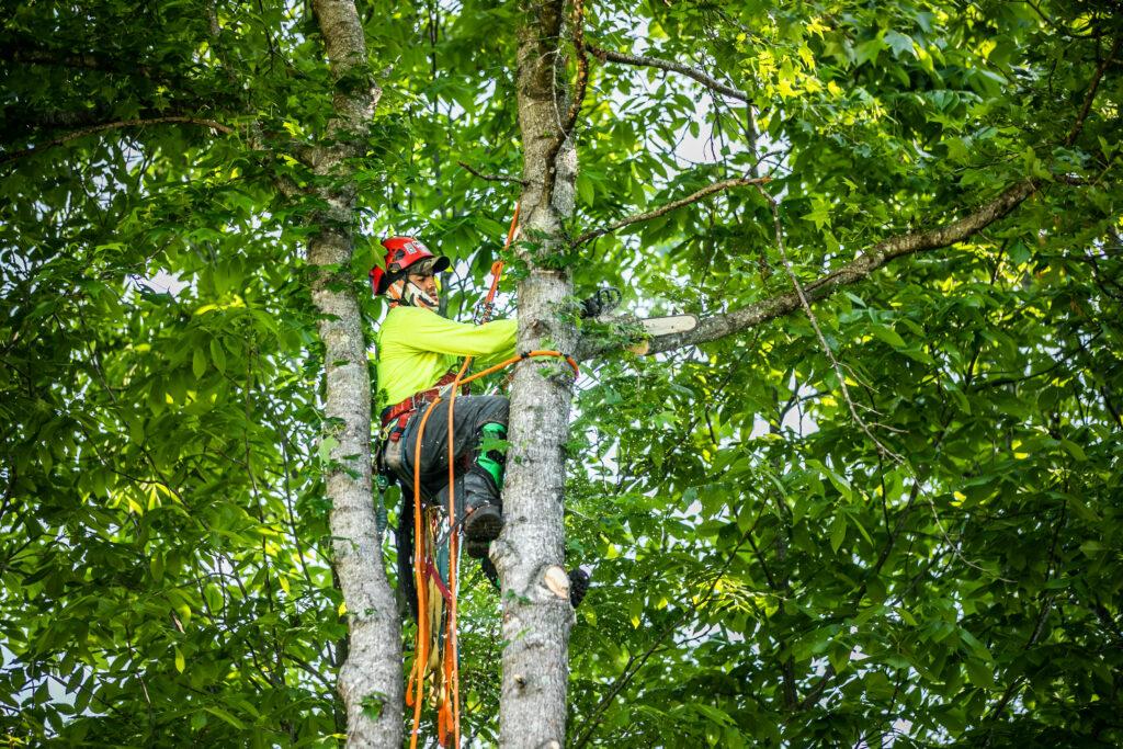Limb & Tree Removal in Atlanta GA