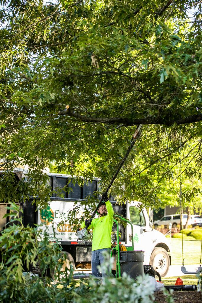 Tree Crown Maintenance in Atlanta GA
