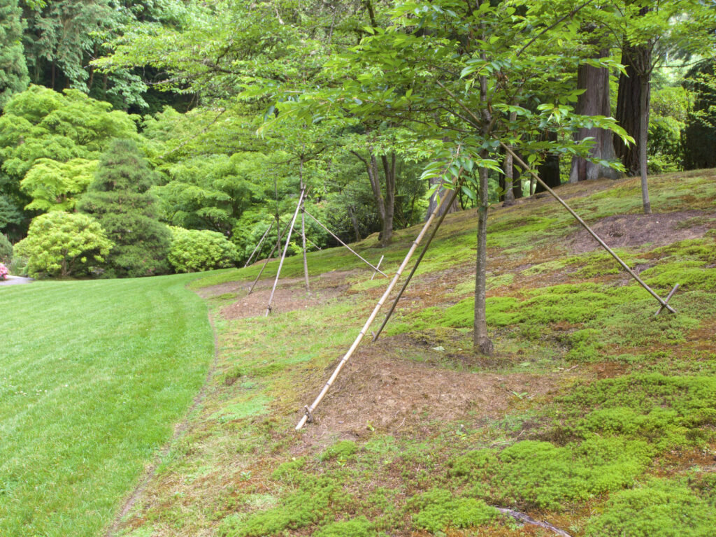 The Art of Tree Cabling